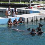 Бассейн с дельфинами