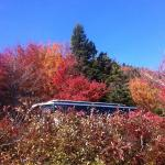 Foto de Oli's Trolley - Acadia National Park Tour