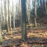 Foto de Old Rag Mountain Hike