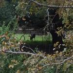 Photo de Red Barn Hideaway