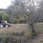 Foto de La Casa Sull'Albero
