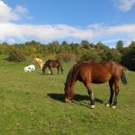 Die Pferde sind das ganze Jahr über draußen