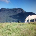 One of the horses grazing....magnificent scenery