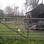 Hen house at Parc Grove - free range eggs provided to guests