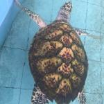 Padang Kemunting Turtle Management Centre