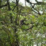 Nairobi Arboretum August 2015