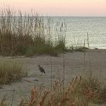 Beach w/bird