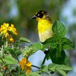 tour packages include birding tours safari that are quite popular in this region.