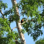 Photo de Kabalebo Nature Resort