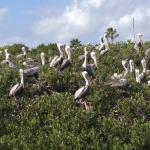 Island colony