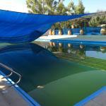 algae filled pool water