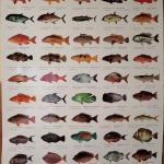 FREE GIFT(FISH POSTER)