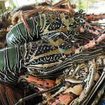 crayfish for dinner