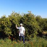 En los naranjos de la vía verde-2
