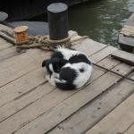 dog kept by boat people