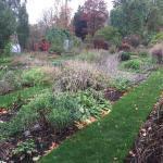 Chelsea Physic Garden Foto