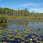 Holt Pond Preserve