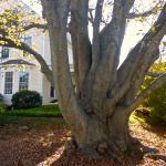 Foto di Beech Tree B&B
