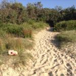Track to Beach