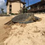 Sea turtles from the beach next to the pool area.