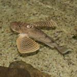 Fish in open tank