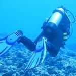 Foto de The Dive Centre - The Big Fish