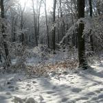 l'hiver a derenbach