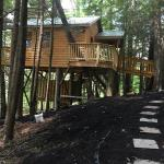 WV's Wild Wonderful Treehouse