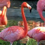 Charles Paddock Zoo Foto