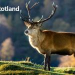 #lovescotland