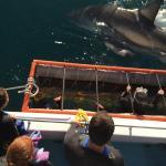 Shark Diving Unlimited Foto