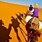 camels trecking