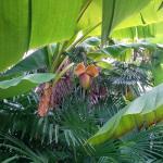 Im Garten wachsen sogar Bananen