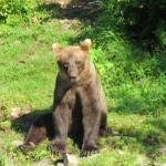 Wolverine Creek Fly Inn Fishing, got to see the bears as a bonus