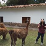 Playing with Cusi (the llama) and Sonqo (the alpaca) (160656006)