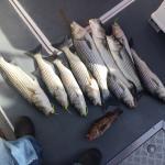 San Francisco Fishing Charter Foto