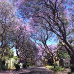 Set in a pretty area with Jacarandas linng the streets