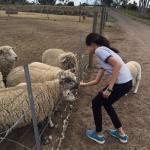 Animal Land Children's Farm Foto
