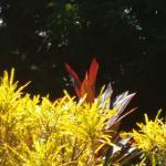 Not a bird! Just a peek of a fire-red bush!