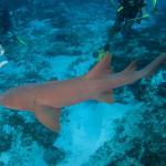 Photo de Deep Life Diving & Training