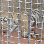Lahore Zoo Safari