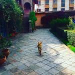 Conan the Hotel Dog and the entrance to the garden