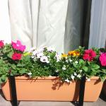 Loverrly window boxes with summer flowers