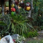 'birds' in hotel grounds