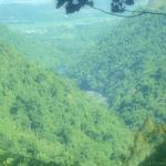 Photo of Kuranda Rainforest Accommodation Park