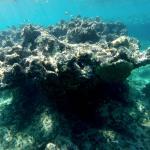 Snorkeling em Tintamarre