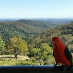 View down valley from deck with local birdlife