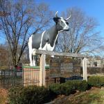 Big Cow, Antoinette