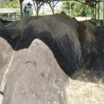 Centre d'Archéologie Amérindienne de Kourou
