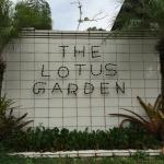 Photo of The Lotus Garden